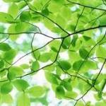 Wat is groene stroom?